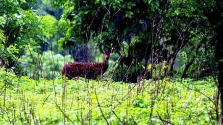 India's Most Haunted: Sanjay Gandhi National Park