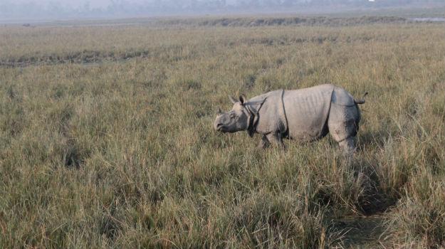 Top 5 offbeat wildlife tours in India