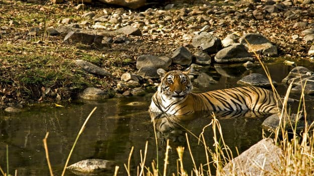 Have you visited Ranthambore National Park? You should!