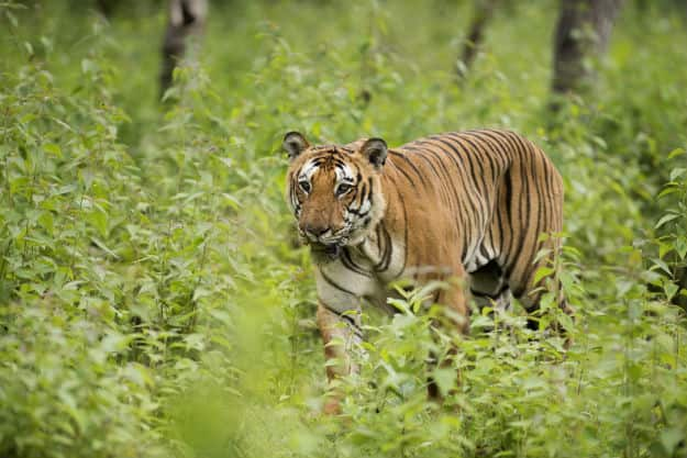 Here's What is Threatening Wildlife in Top Asian Countries