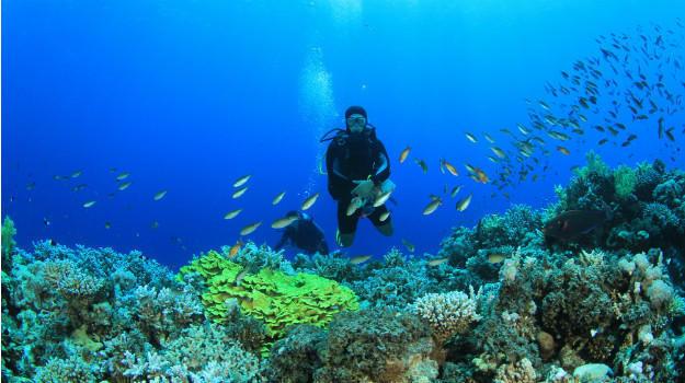 scuba diving in india price