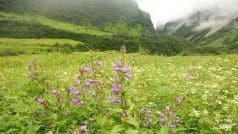 Road Trip: Here's How You Can Reach Valley of Flowers From Dehradun by Road