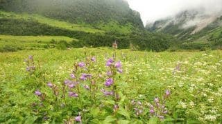 Dehradun to Valley of Flowers: How to reach Valley of Flowers from Dehradun by road
