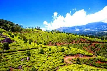 5 Reasons to Visit Munnar in April