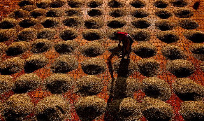 Coffee plantation, Chikmagalur