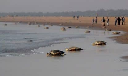 Odisha is an Ideal Place For a Beach Holiday in Winter Months