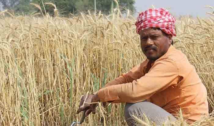 Government Hikes Customs Duty on Wheat to 40 Per Cent