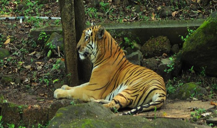 Mhadei Wildlife Sanctuary