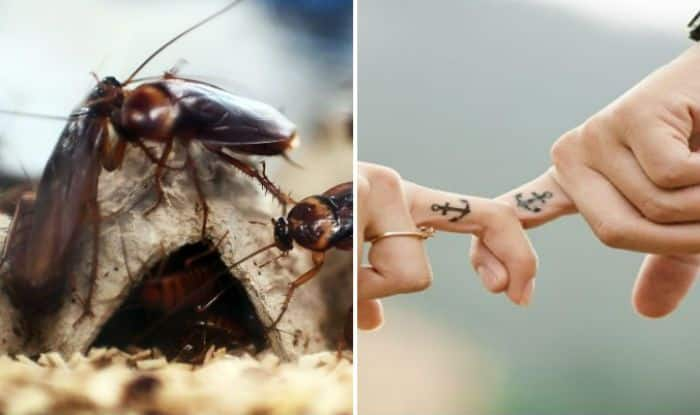 This Valentine's Day You Can Name a Cockroach After Your ex-Lover, Know Here How