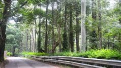 Yercaud Has The Most Abundant Fruit And Spice Plantations in Tamil Nadu