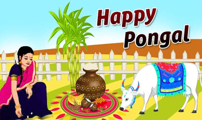 Pongal 2019: Date, Time, Muhurat, Importance And Significance of Sun God Festival