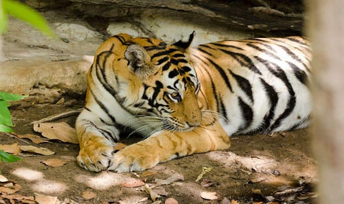 Things to do in And Around Bandhavgarh National Park in Madhya Pradesh