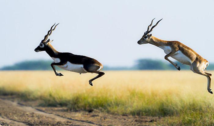 Rehekuri Wildlife Sanctuary