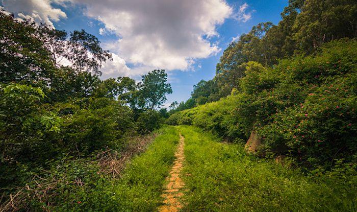 Best Forest Trekking Trails in Tamil Nadu