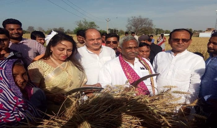 LS Polls 2019: Hema Malini Spotted Harvesting in Mathura; Check Out Pictures Here