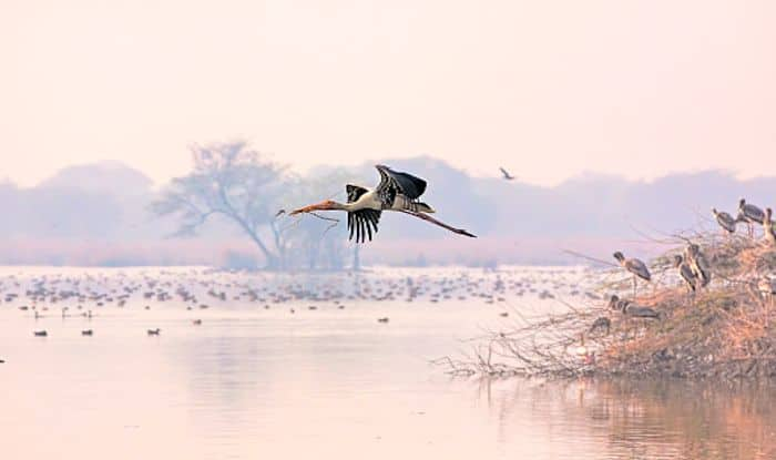 Give Taj Mahal a Break And Visit Keoladeo Ghana National Park Near Agra