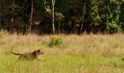 What You Must Experience at Kanha National Park