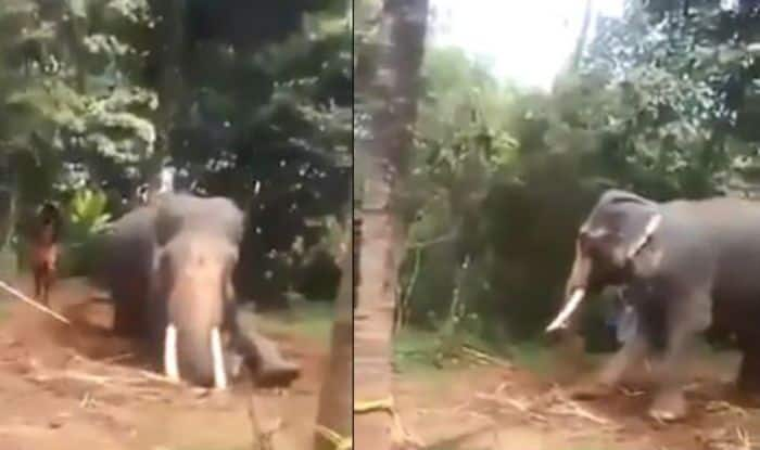 Disturbing Video of Kerala Trainers Beating an Elephant With Sticks Has Gone Viral, Watch