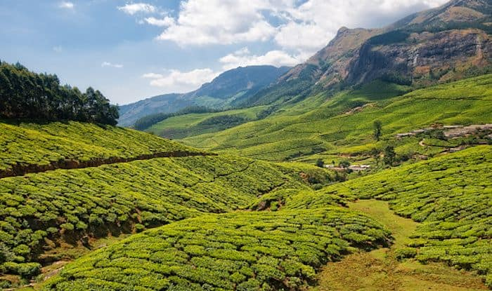Kolukkumalai: The Highest Tea Plantation in The World
