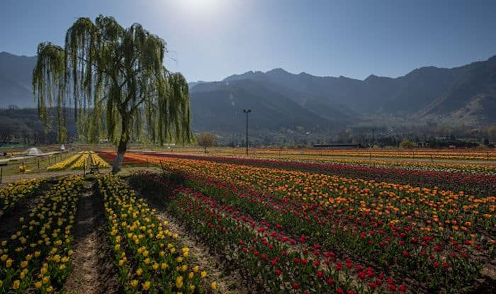 Visit Kashmir in April When The Tulip Gardens Are in Full Bloom