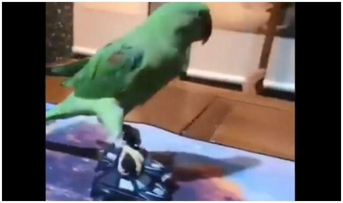 Parrot Mimicing Ajay Devgn's Stunt Has Twitterati in Splits, Riteish Deshmukh Too Can't Help Taking a Dig