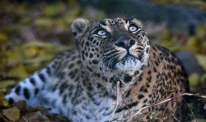 Dachigam National Park: Up And Close With Kashmir's Wildlife