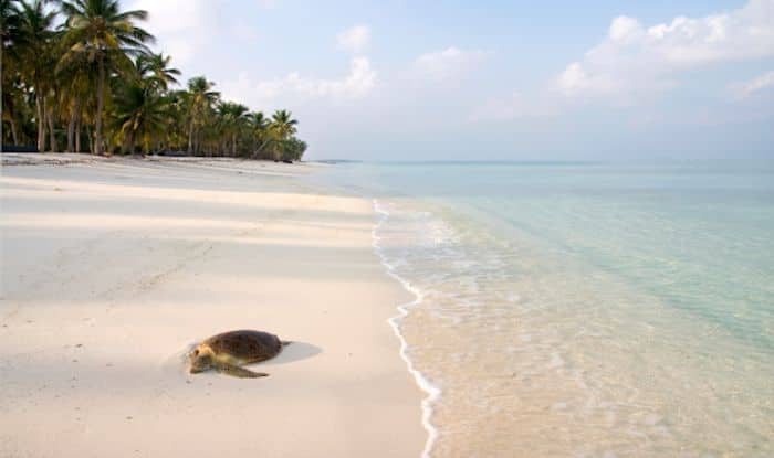 Why You Must Give Diving a Shot at Lakshadweep Islands