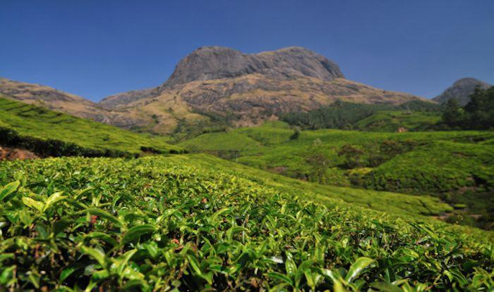 Anamudi: The Highest Peak in The Western Ghats