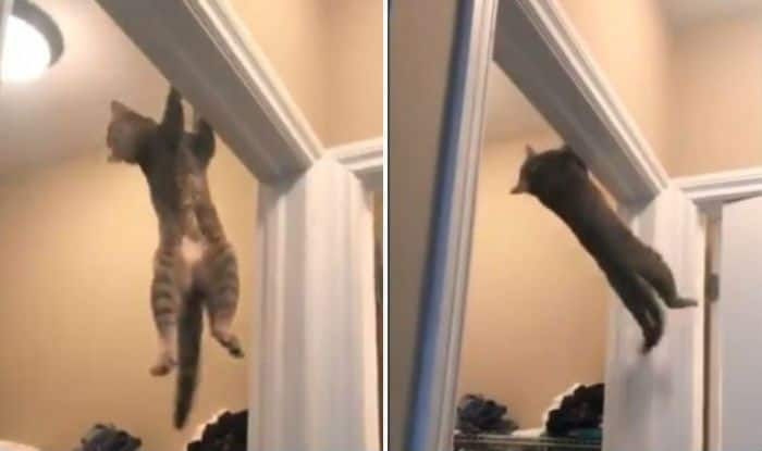 Cat doing acrobatic jump