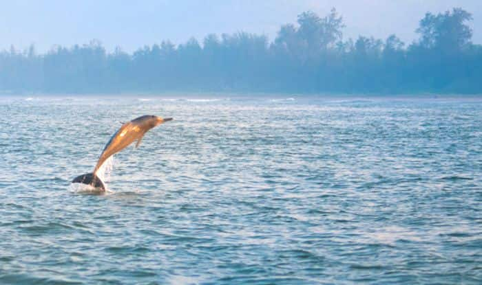 It's Time to Conserve The Natural Habitat of Indus River Dolphins