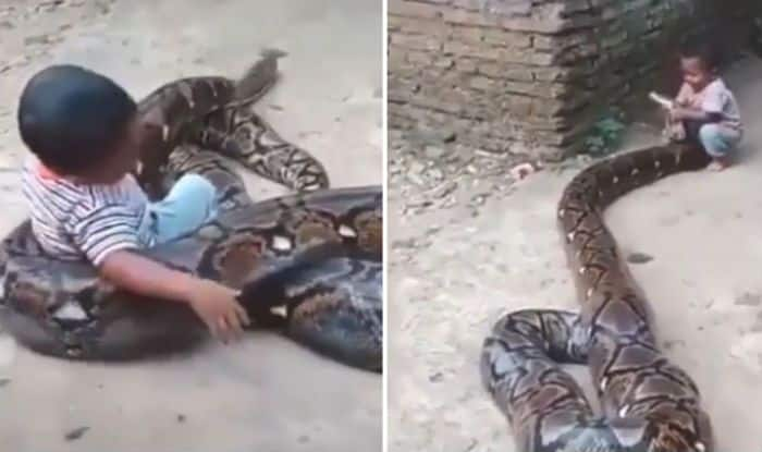 Kid playing with snake