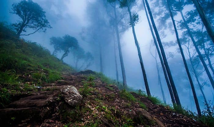 Give Kodaikanal a Miss, And Head to Vellagavi Instead