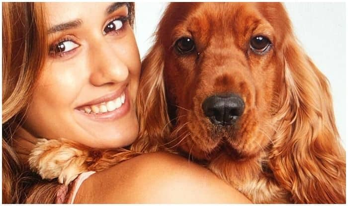 Bella Patani's Sad Eyes as Disha Patani Leaves For Malang's Shoot at Night is All Pets Ever!