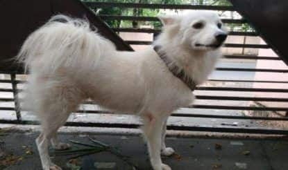 Pomeranian Abandoned by Owner for Having 'Illicit Relationship' With Neighborhood Dog in Kerala