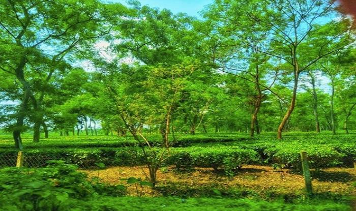Top 5 Must-Visit Tea Estates in Assam For The Discerning Traveller