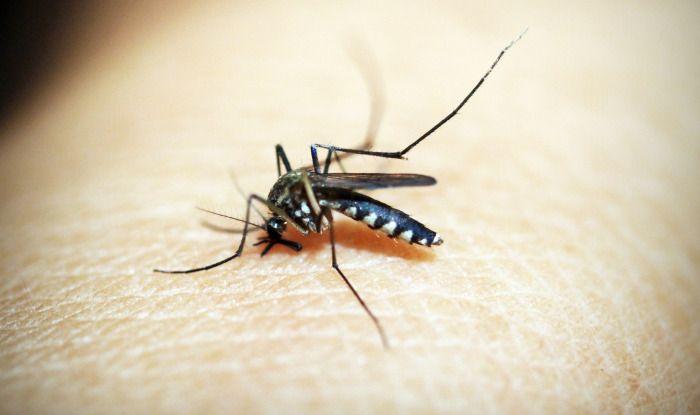 Bangladesh, Dengue outbreak, Dhaka, Aedes aegypti mosquito
