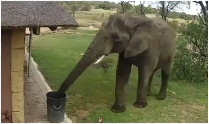 Who's The Good Boi? Elephant!: Twitterati Hail Mammoth Species After Watching it Throw Trash in Bin