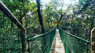 For India's First Canopy Walk Experience, Head to Kuveshi in Karnataka