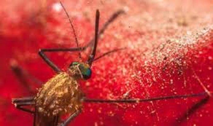 Easy Hacks to Keep Chikungunya at Bay