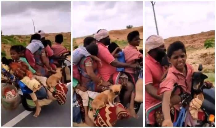 Family of 7 rides a bike with pet dogs and a hen