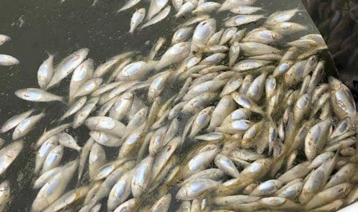 Thousands of Fish Die in Ranchi After Diwali And Durga Puja, Read on