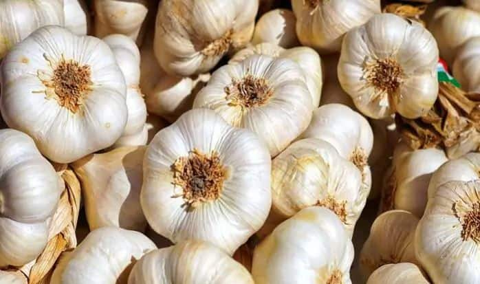 Garlic is Secret to a Healthy Heart, Know The Benefits