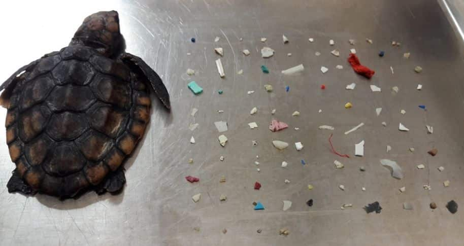 This Turtle Ate 104 Pieces of Plastic. Shocking Photo Goes Viral After Death