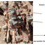 New Photos Claim Evidence of Life on Mars: US Scientist