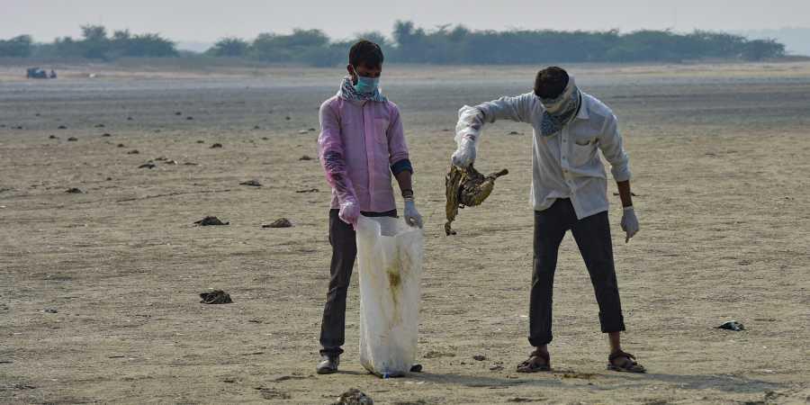 Sambhar Mystery Solved: Avian Botulism, A Bacterial Disease Behind Deaths Of 18,000 Migratory Birds