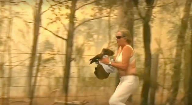 Watch   Woman Hailed As a Hero After She Risks Her Life to Rescue a Koala from Wildfire