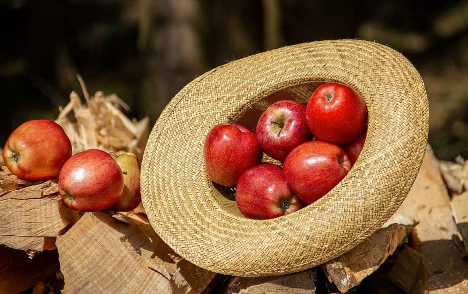 Health Benefits of Apple You Need to Know