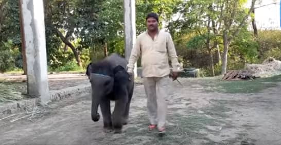 Say Hello to Baby Elephant Durga, The New Mascot of UP's Dudhwa National Park