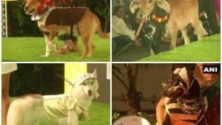 Dressed Up Pets Walk the Ramp, Take Part in Chennai Pet Fashion Show