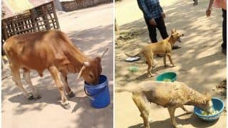 Odisha Govt Sanctions Rs 54 Lakh To Feed Stray Animals Amid Lockdown, Internet Hails the Move